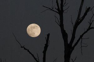 Full_moon_(6701323121)