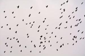 flock-2574265_1280